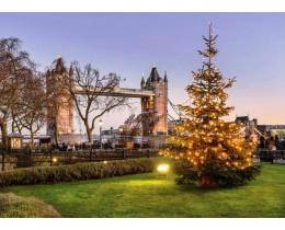 Christmas day Hop-on Hop-off London Bus Tour